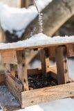 Фидер птицы с семенами подсолнуха в зиме Стоковое фото RF
