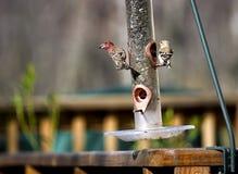фидер птицы Стоковая Фотография