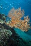 Фиджи подводное Стоковые Фото