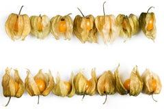 Физалис, плодоовощи с papery шелухой Стоковое Изображение RF