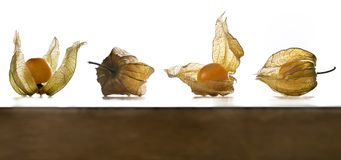 Физалис, плодоовощи с papery шелухой Стоковая Фотография
