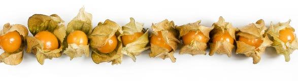 Физалис, плодоовощи с papery шелухой Стоковое Фото