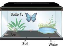 Физика - аквариум и бабочка иллюстрация штока