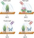 Физика - стеклянный фонарик экспериментам по вентилятора иллюстрация вектора