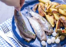 Филе сельдей в женской руке, испеченной в картошках печи и соленьях и луках Очень вкусная традиционная еда Голландии голландско стоковое изображение rf