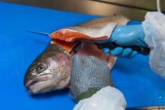 Филе форели вырезывания на рыбоводческом хозяйстве, Франции стоковая фотография