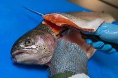 Филе форели вырезывания на рыбоводческом хозяйстве, Франции стоковое изображение