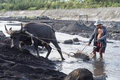 Филиппинский человек и его индийский буйвол собрать вулканический песок в реке на Legazpi, Филиппинах стоковое фото
