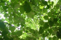 фильтрованное светлое солнце Стоковая Фотография RF