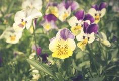 Фильтрованный год сбора винограда, цветки в саде Стоковые Изображения RF
