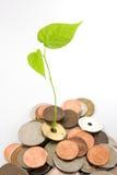 финансовохозяйственный рост Стоковые Фото