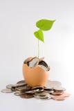 финансовохозяйственный рост Стоковые Фотографии RF