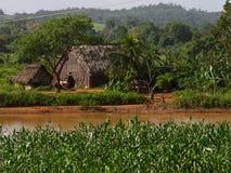 Финалы Куба фермы табака Стоковое фото RF