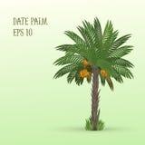 Финиковая пальма с плодоовощами иллюстрация штока
