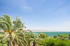Финиковые пальмы на береге озера Kinneret стоковое изображение