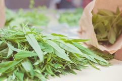 Финские одичалые травы собрали прямо от природы: Свежие крапивы и другие дикие растения в бумажной сумке Сырцовая еда здорова и стоковое фото rf