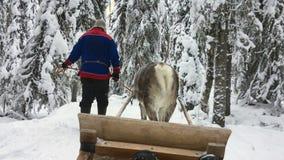 Финский человек в национальной одежде Лапландии управляет оленем который вытягивает сани вдоль живописной дороги зимы среди дерев сток-видео