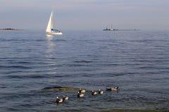 Финляндия: Плавать в Балтийском море Стоковые Фото