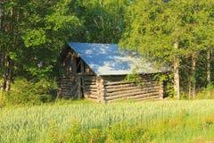 Финляндия: Старый амбар на пшеничном поле Стоковое Фото