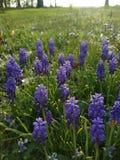Фиолетовая армия стоковые изображения