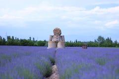 Фиолетовая предпосылка поля лаванды с куклой лаванды Стоковое Изображение