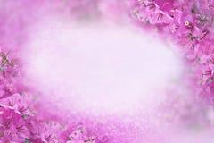 Фиолетовая рамка бугинвилии цветка на сладостной фиолетовой предпосылке с bokeh и экземпляр размечают идею для карточки свадьбы Стоковое фото RF