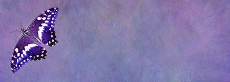 Фиолетовое знамя доски для сообщений бабочки Стоковая Фотография