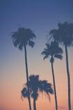 Фиолетовое оранжевое небо захода солнца с пальмами стоковая фотография rf