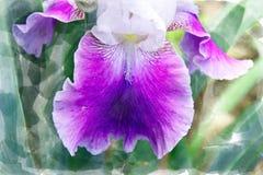 Фиолетовое цветение орхидеи - зацветая сад цветет в лете, дизайне щетки акварели стоковые фотографии rf