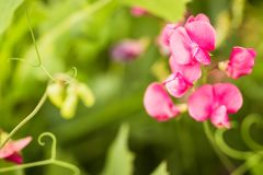 Фиолетовое цветорасположение wildflowers Стоковое Изображение RF