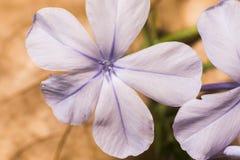 Фиолетовое flower-21 Цветки и сады стоковые изображения