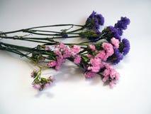 Фиолетовые и розовые цветки statice известные также как limonium или Ла моря стоковое фото