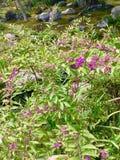 Фиолетовые мини одичалые ягоды в саде Дзэн стоковое изображение rf