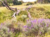 Фиолетовые мини цветки сирени и дерево Falled стоковое изображение rf