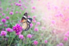 Фиолетовые цветки в задворк Стоковое фото RF