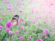 Фиолетовые цветки в задворк Стоковые Фото