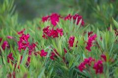 Фиолетовые цветки в крупном плане лета стоковые изображения rf