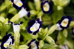 Фиолетовые цветки в саде утра стоковые изображения