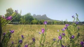 Фиолетовые цветки, и взгляд к части природы Стоковая Фотография RF