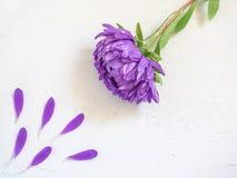 Фиолетовые цветки и лепестки на белой предпосылке Стоковые Фото