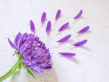 Фиолетовые цветки и лепестки на белой предпосылке Стоковое фото RF