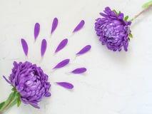 Фиолетовые цветки и лепестки на белой предпосылке Стоковое Изображение RF