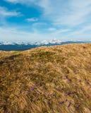 Фиолетовые цветки крокуса на горе весны стоковое изображение