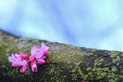 Фиолетовые цветки - цвета в предпосылке природы - красота везде Стоковая Фотография RF