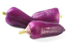 Фиолетовые экзотические болгарские перцы цвета изолировали белую предпосылку Стоковое Фото
