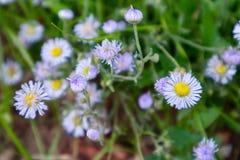Фиолетовые wildflowers и съемка макроса травы Стоковое Фото