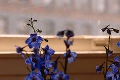 Фиолетовый букет Wildflower перед окном, с взглядом района через стекло в вечере Стоковые Фото