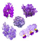 Фиолетовый изолированный комплект цвета орхидеи в белизне Стоковое Фото