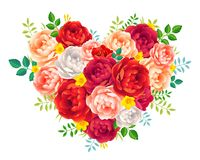Фиолетовый красный и розовый пион цветет с сердцем вектора листьев флористическим на белой предпосылке Стоковые Фото