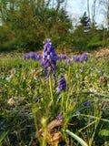 Фиолетовый руководитель цветка стоковое фото